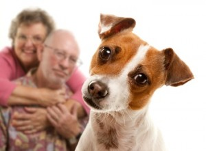 Discuss pet care with your estate planning lawyer.